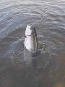 開成水辺フォレストスプリングス 釣れない