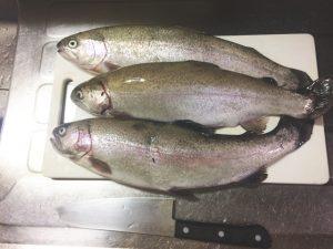 ニジマス(虹鱒)の簡単な捌き方!3枚おろしにして美味しく食べよう