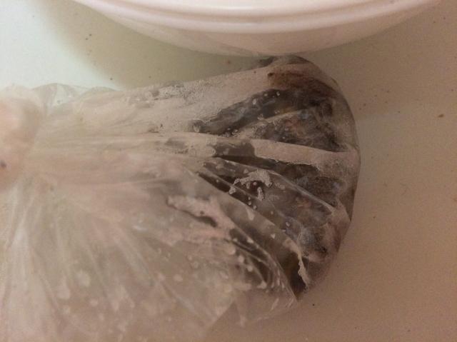 塩イソメ ビニール袋