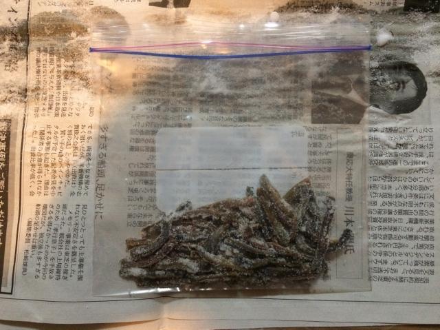 塩イソメの作り方!釣りで余ったイソメを塩漬けにして保存しよう!